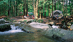 Tentsites at an NCA Member Campground in New Hampshire!